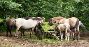 Άλογα που τρώνε τη χλόη από ένα γεωργικό αυτοκίνητο Στοκ φωτογραφία με δικαίωμα ελεύθερης χρήσης