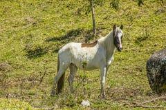Άλογα που τρώνε υπαίθρια στοκ εικόνα