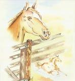 άλογα που χρωματίζονται Στοκ Εικόνες