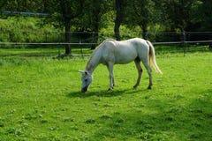 Άλογα σε ένα λιβάδι Στοκ φωτογραφίες με δικαίωμα ελεύθερης χρήσης