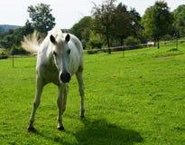 Άλογα σε ένα λιβάδι Στοκ φωτογραφία με δικαίωμα ελεύθερης χρήσης