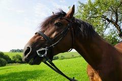 Άλογα σε ένα λιβάδι Στοκ εικόνες με δικαίωμα ελεύθερης χρήσης
