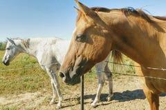 Άλογα στην επαρχία του Κολοράντο στοκ φωτογραφία με δικαίωμα ελεύθερης χρήσης