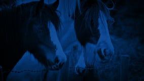 Άλογα στον τομέα τη νύχτα φιλμ μικρού μήκους