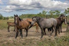 Άλογα στο έδαφος λιβαδιού στοκ εικόνες