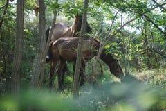 Άλογα στο δάσος Στοκ Φωτογραφία