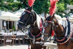Άλογα στο κύριο τετράγωνο της Κρακοβίας στοκ εικόνα