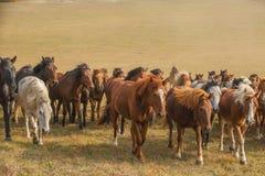Άλογα στο λιβάδι της εσωτερικής Μογγολίας, Κίνα στοκ εικόνες