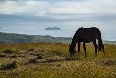 Άλογα στο νησί Πάσχας στοκ εικόνες με δικαίωμα ελεύθερης χρήσης