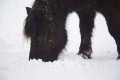 Άλογα στο χιόνι Στοκ Εικόνες