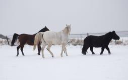 Άλογα στο χιόνι Στοκ εικόνα με δικαίωμα ελεύθερης χρήσης