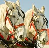 άλογα σχεδίων Στοκ φωτογραφίες με δικαίωμα ελεύθερης χρήσης