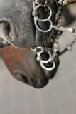 άλογα υπηρεσίας Στοκ φωτογραφία με δικαίωμα ελεύθερης χρήσης