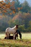 άλογα Στοκ εικόνα με δικαίωμα ελεύθερης χρήσης
