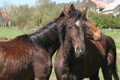 άλογα Στοκ φωτογραφίες με δικαίωμα ελεύθερης χρήσης