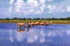 Άλογα Henson στα έλη στους κόλπους somme στοκ φωτογραφίες με δικαίωμα ελεύθερης χρήσης