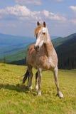 άλογο βουνοπλαγιών Στοκ εικόνες με δικαίωμα ελεύθερης χρήσης