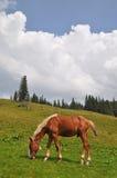 άλογο βουνοπλαγιών Στοκ φωτογραφία με δικαίωμα ελεύθερης χρήσης