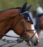 άλογο εκπαίδευσης αλόγου σε περιστροφές Στοκ φωτογραφία με δικαίωμα ελεύθερης χρήσης