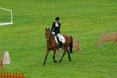 άλογο εκπαίδευσης αλόγου σε περιστροφές Στοκ εικόνες με δικαίωμα ελεύθερης χρήσης