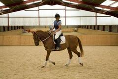άλογο εκπαίδευσης αλό&gamm Στοκ Φωτογραφία