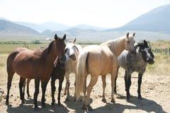 άλογο ζαμπόν επάνω Στοκ Εικόνες