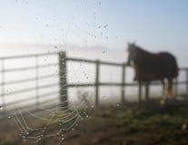 άλογο ιστών αράχνης Στοκ Φωτογραφία