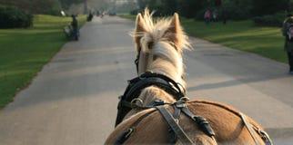 άλογο κάρρων Στοκ Φωτογραφίες