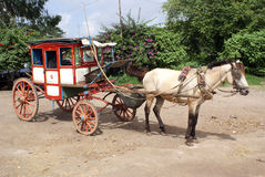 άλογο κάρρων Στοκ εικόνες με δικαίωμα ελεύθερης χρήσης