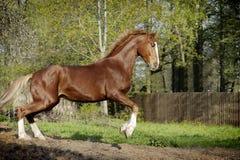άλογο κάστανων ενέργειας Στοκ εικόνα με δικαίωμα ελεύθερης χρήσης