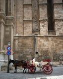 άλογο καθεδρικών ναών με&tau Στοκ φωτογραφίες με δικαίωμα ελεύθερης χρήσης