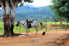Άλογο και ένα κοτόπουλο στο αγρόκτημα στοκ φωτογραφία με δικαίωμα ελεύθερης χρήσης