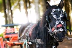 Άλογο και λεωφορείο στοκ εικόνα