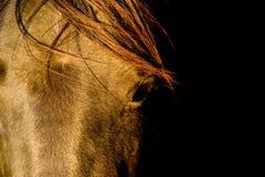 άλογο κινηματογραφήσεων σε πρώτο πλάνο Στοκ φωτογραφίες με δικαίωμα ελεύθερης χρήσης