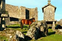 Άλογο κοντά στους σιτοβολώνες Lindoso στο εθνικό πάρκο Peneda Geres στοκ φωτογραφία