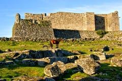 Άλογο κοντά στο κάστρο Lindoso στο εθνικό πάρκο Peneda Geres στοκ εικόνες