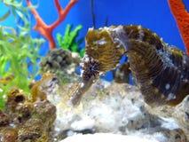 Άλογο & κοράλλι θάλασσας στοκ εικόνα με δικαίωμα ελεύθερης χρήσης