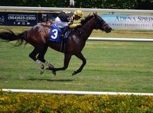 Άλογο κούρσας που τρέχει στο καλώδιο στοκ εικόνα με δικαίωμα ελεύθερης χρήσης