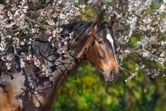 Άλογο κόλπων στα λουλούδια στοκ εικόνες