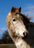 άλογο λασπώδες Στοκ Εικόνα