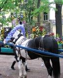 άλογο λουλουδιών σύνθ&epsi Στοκ Εικόνα