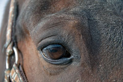 άλογο ματιών Στοκ Εικόνες