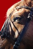 άλογο ματιών Στοκ εικόνες με δικαίωμα ελεύθερης χρήσης