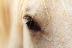 άλογο ματιών Στοκ Εικόνα