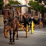 άλογο μεταφορών Στοκ Εικόνα