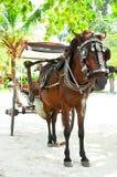 άλογο μεταφορών Στοκ εικόνα με δικαίωμα ελεύθερης χρήσης