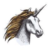 Άλογο μονοκέρων με το κέρατο και το χρυσό σκίτσο Μάιν απεικόνιση αποθεμάτων