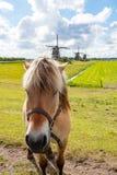 Άλογο μπροστά από τρεις ανεμόμυλους στο leidschendam, Κάτω Χώρες Στοκ Εικόνες