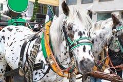 Άλογο-οδηγημένη μεταφορά Hofburg στο παλάτι, Βιέννη Στοκ Εικόνες