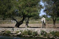 άλογο παλαιό Στοκ εικόνες με δικαίωμα ελεύθερης χρήσης